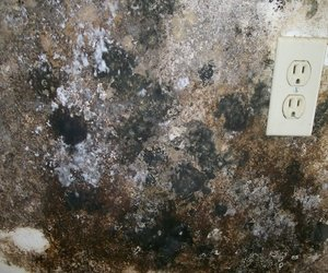 4 Common Signs Of Mold